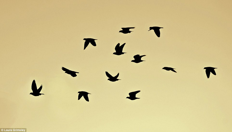 Pigeons over my garden, by Laura Grimsley, which was highly commended by the panel