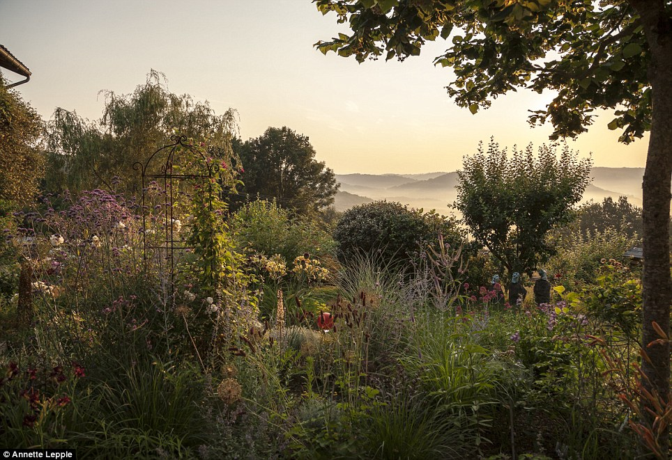 Wild: And Anne Lepple's so-called Morning Magic, with sprawling plants clustered before misty fields, was highly commended by the panel of gardening and photographers judging