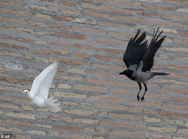 Watch out: After the pope and the two children left the windows, a seagull and a big black crow quickly swept down, attacking the doves, including one which had briefly perched on a windowsill