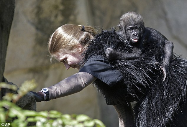 Go ape: Ashley Chance wears a furry vest as she walks with Gladys on her back