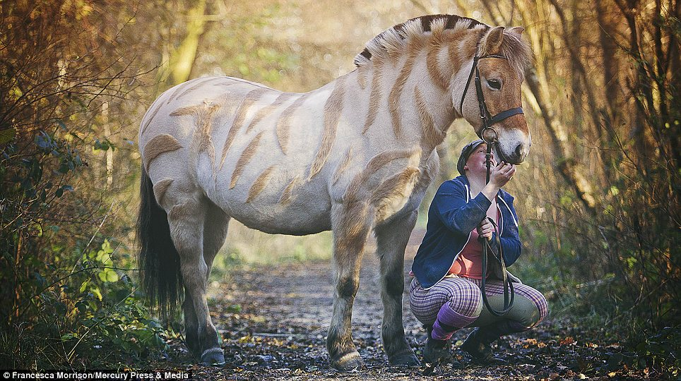 Woodland: Miss McKenna takes her beloved pony on a trip through a patch of countryside