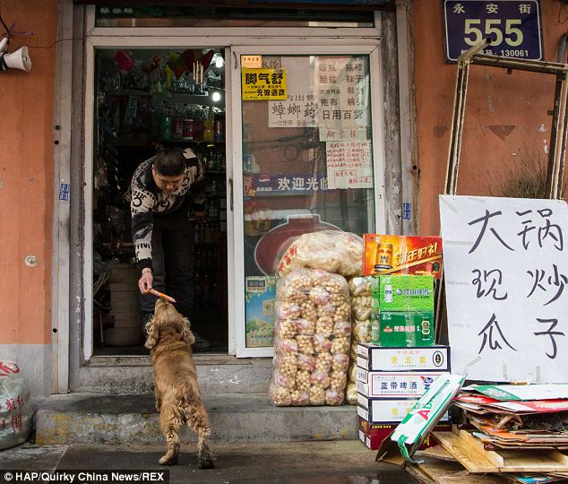 One of your finest sausages please, shopkeep: The canny canine uses the cash to buy himself snacks and treats