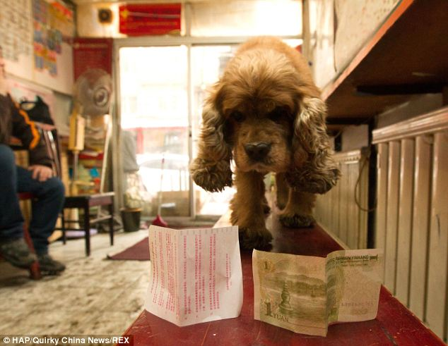 Nobody's fool: Bobby's owner Wang Chun says the dog is smart enough to distinguish between money and paper