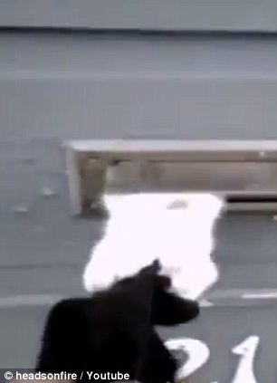 "The age-old dispute between watchdogs and mail carriers is still raging with no end in sight, and the canines may now find they have the support of an unlikely ally: a tenacious cat.  In a clip from a recent episode of America's Funniest Home Videos—hence the audience laughter—a mailman steels himself for his daily battle with a vigilant black-and-white kitty. Seeing him approach the house, he leaps to position behind the front door's letter slot and proceeds to lash out furiously with his claws whenever the little flap opens. As you might imagine, it takes a while for the junk mail to make it in, at which point it was likely torn to shreds.  ""Boy, he's getting tougher,"" the mailman admits when at last he's delivered everything. No kidding: This encounter meant some new holes in the guy's gloves, but give it another week and I bet this cat breaks the door down."