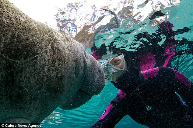 Margaux Maes befriended this manatee while on holiday on the Crystal River in Citrus County, Florida