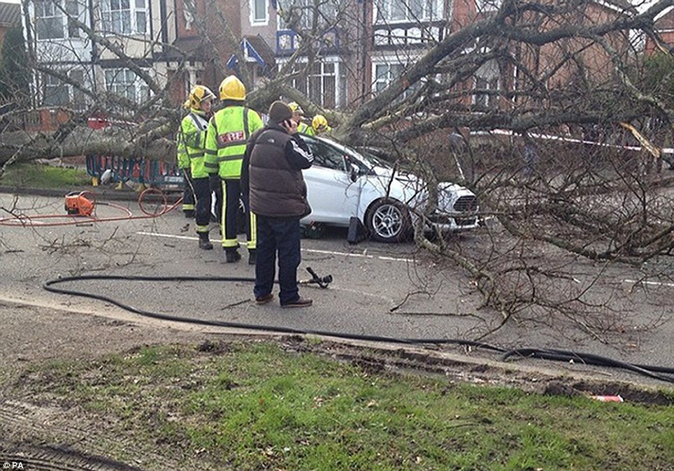 An elderly woman had to be rushed to hospital after an uprooted tree smashed into the roof of her car