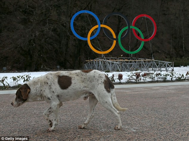 Strays: Packs of wild dogs have been wandering round Sochi and now face extermination with poison and traps