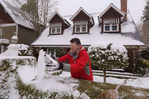 Frozen: Shaun Burke cleans the ice and snow off bushed that border his home in Lake Oswego, Oregon on Sunday morning in case it kills the plants. Another swathe of snow and ice is hitting the U.S.