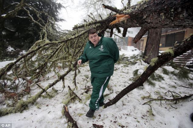 Trouble: Melanie Haley walks beneath one of three trees that came down near her house in Eugene, Oregon on Sunday after ice and snow swept through the area on Saturday