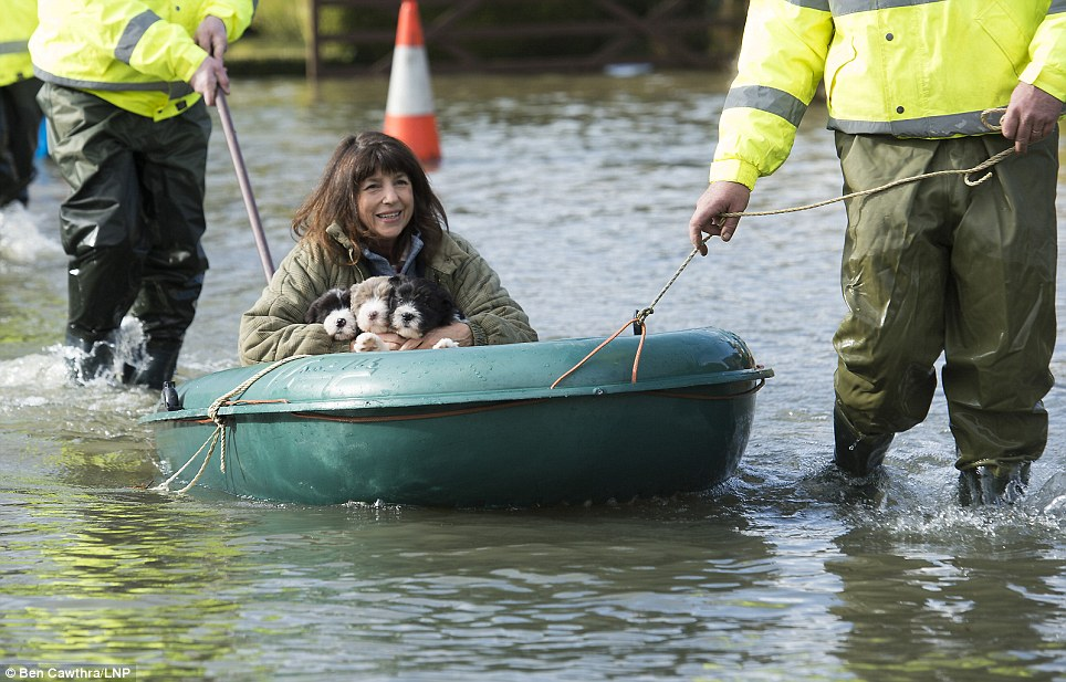 Animal rescue: Sue O'Brien and her three puppies are rescued from her flooded home in Wraysbury, Surrey