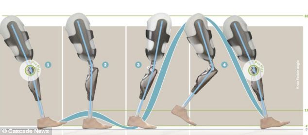 A diagram showing the natural walking gait - or pattern - the wearer of the prosthetic will achieve. It is very similar to the gait of someone without a bionic limb