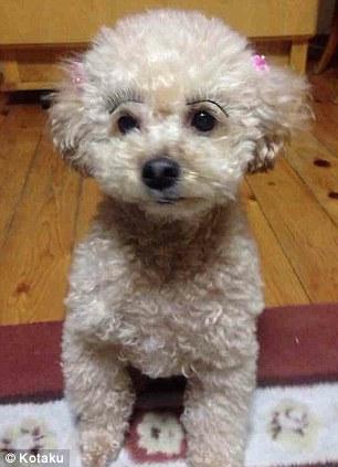 A dog wearing false eyelashes