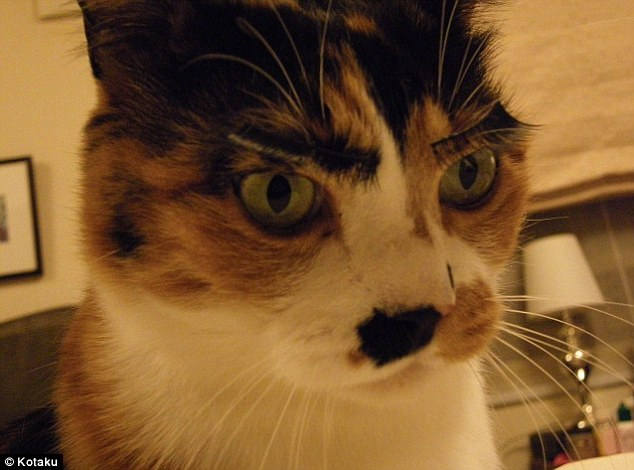 Furry-ous: Cats don't take quite as well to fake eyelashes, it seems. This one looks terribly stern