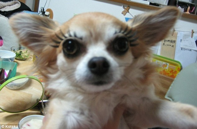 Woof woof: While some of the dogs look bizarre or unnerving, others are strangely suited to fake lashes