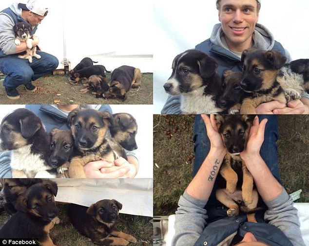 Working it: Kenworthy posted photos on Facebook of him playing with the dogs and said that he was going to visit them throughout his stay in Sochi