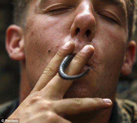Not for the faint-hearted: A U.S. Marine plays with a tail of a dead cobra in his mouth during a jungle survival exercise with the Thai Navy as part of the Cobra Gold 2014
