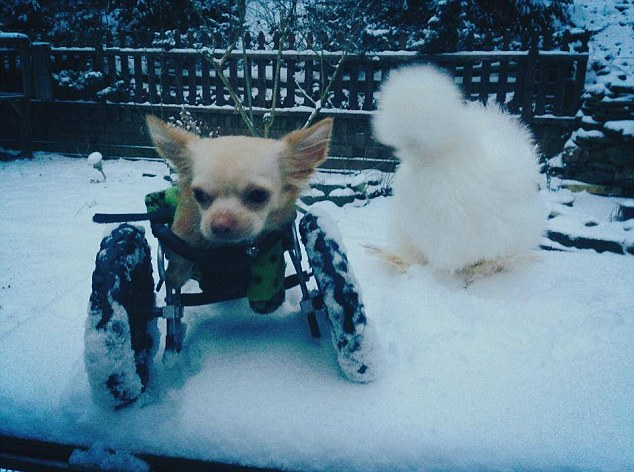Snow day: The dog and bird explore a wintry garden together