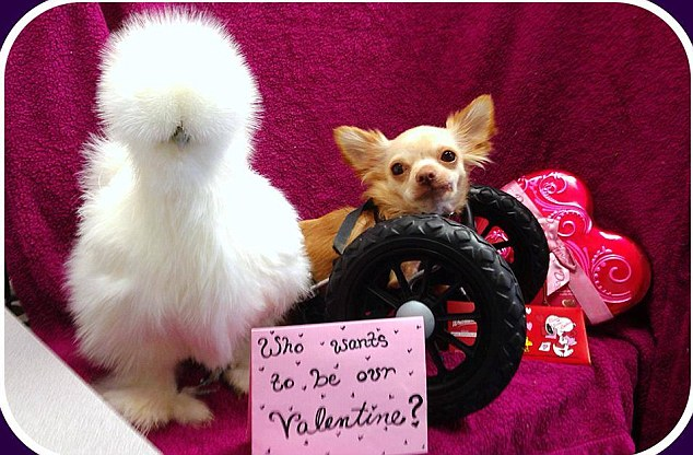 Adorable: The fluffy friends pose for a Valentine's Day picture