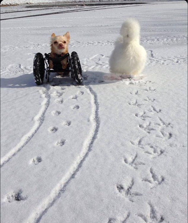 Friend in need: The pair leave an adorable set of prints behind as they play in snow for the first time