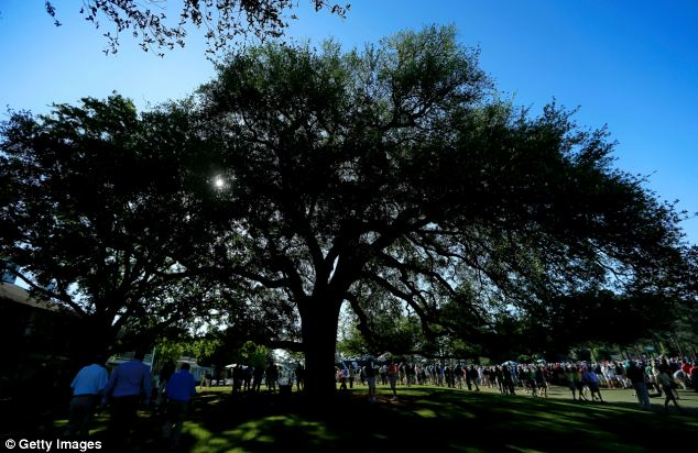 Felled: Patrons walking past the Eisenhower Tree during the third round of the 2012 Masters Tournament at Augusta National Golf Club in Augusta, Georgia