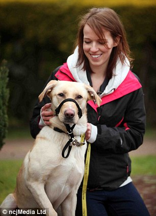 Martey the hungry Labrador with Miss Campbell