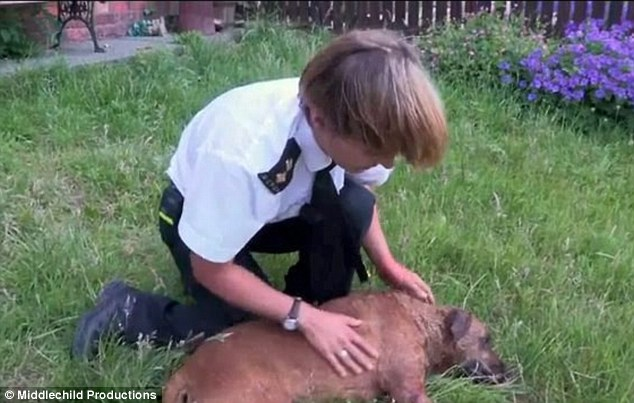 Care: RSPCA Inspector Vicki McDonald looks after one of the dogs outside the property after it was raided last June