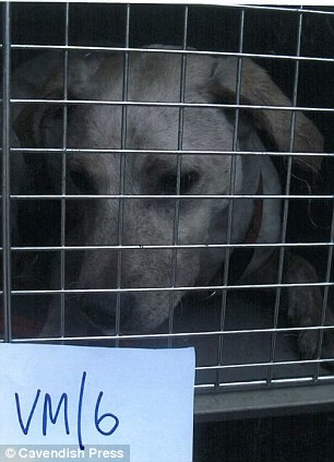 Rescue dog: Another one of the animals being cared for by the RSPCA