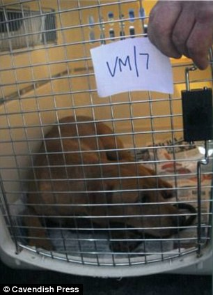 Rescue: Another dog is cared for by vets