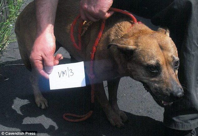 Rescue dog: Panting for breath, this dog has its photograph taken after being saved from the home near Wigan last June