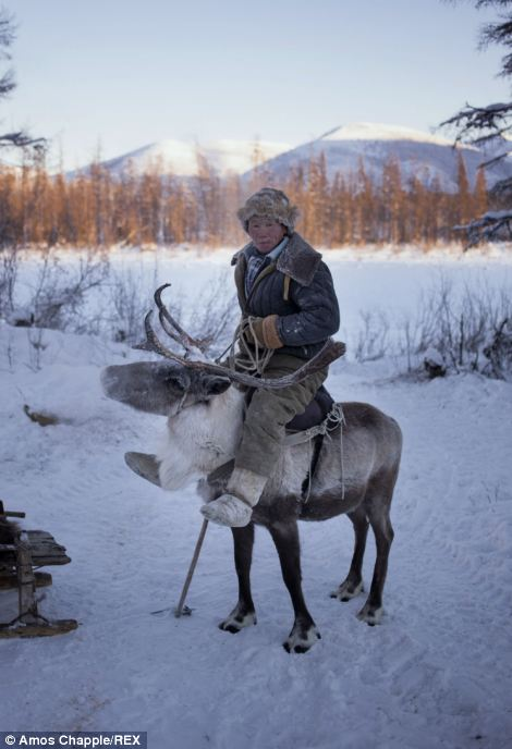 Transportation: Vladimir rides the reindeer like horses using a special saddle unique to the Evenk culture