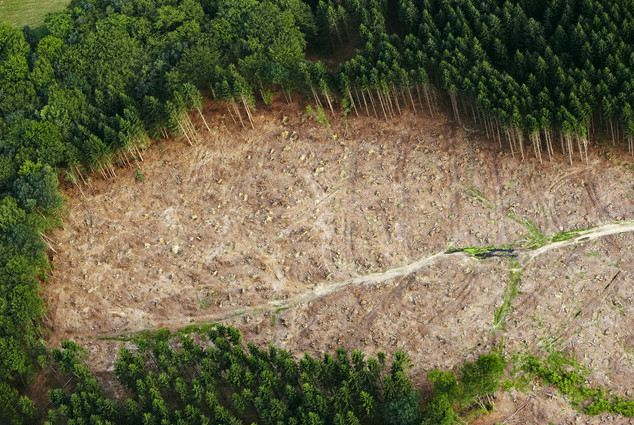 The world lost 2.3 million square kilometres (230 million hectares) of tree cover from 2000 to 2012, according to data from the University of Maryland and Google. A forest clearing is pictured