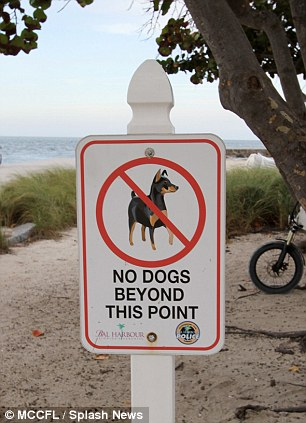 Rules: A sign clearly states that no dogs are allowed on the beach but Simon may well not have spotted it