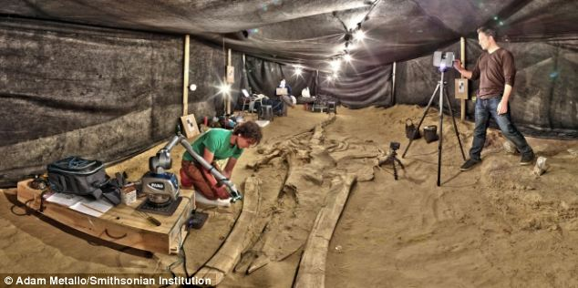 Paleontologists estimate that the skeletons are between 6 million and 9 million years old. Scientists think the mass strandings occurred over a period of more than 10,000 years