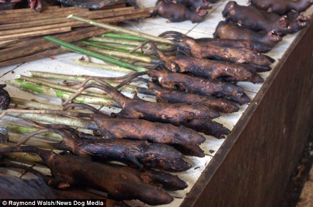 Skewered: The rats are flame-roasted on sticks after being killed by having their heads thumped against a tree
