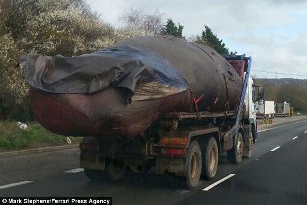Surreal: Commuters spotted this enormous sperm whale carcass on the A2 in Kent