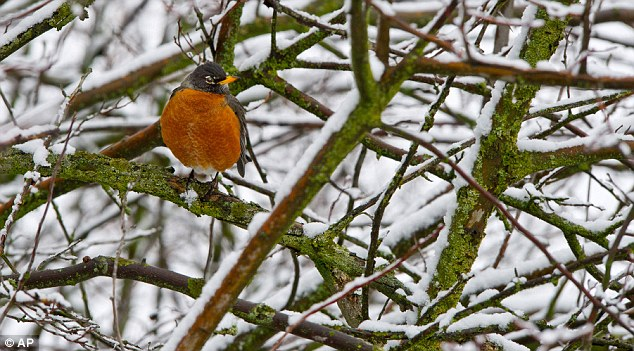 Delays: Hopes that the first week of March would bring signs of spring have been dashed