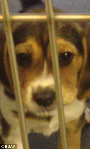 A staggering 92 puppies, 10 adult female dogs and at least 15 kittens were killed during the investigation at the centre