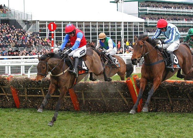 History maker: Quevega (left) will attempt to win the mares' race for the sixth time on Tuesday