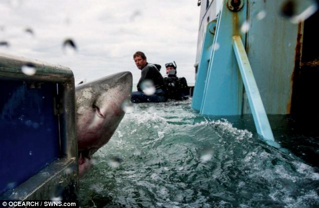 Lydia was tagged by the Ocearch project, which aims to monitor sharks to learn more about their movements