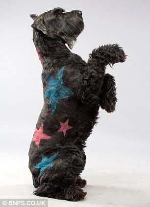 And pets prefer the paint to traditional fabric costumes because they don't know they look any different, Mr Geary said