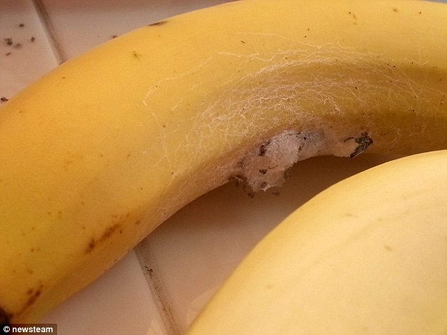 Spiders nesting: Mr Roberts, 31, spotted white patches covering pieces of the fruit after he put them in a bowl - but assumed at first that this was mould