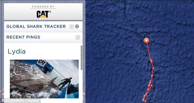 Lydia has become the first tagged great white to cross the Mid Atlantic Ridge (pictured) - an underwater mountain range which separates the Eurasian and North American Plates - at around 10am on March 9