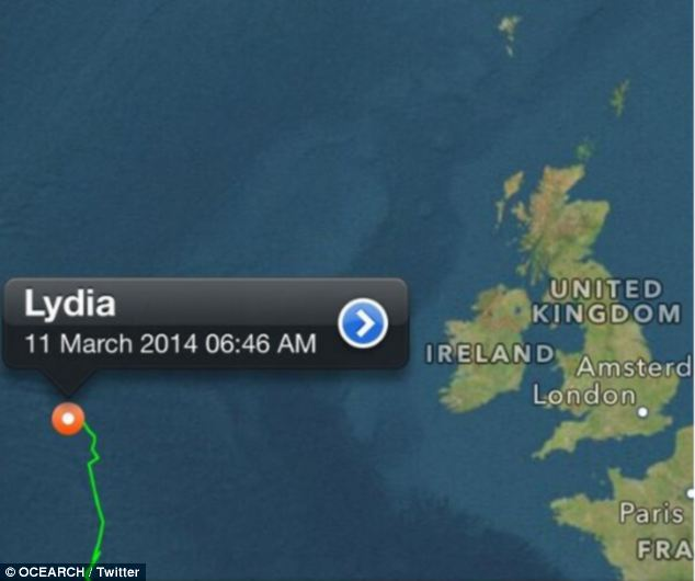 The great white sharked named Lydia has travelled 313 miles in the past 72 hours. She is currently headed west (pictured) But experts believe the shark is pregnant and in search of a nursery for her pups and could be en route to the Mediterranean