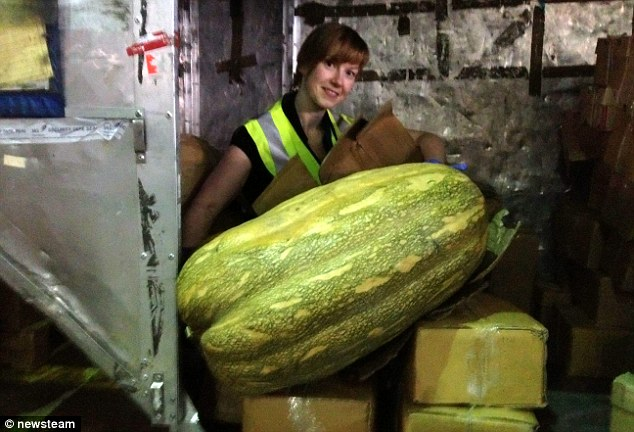 Busted: This giant squash weighing 4st was seized by officials at Birmingham Airport