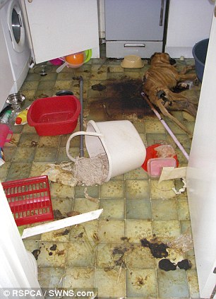 Shock: The RSCPA released photos of the dog's body to show the gravity of Gammon's crimes