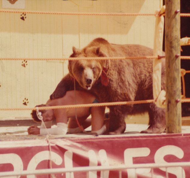 Andy Murray trained Hercules to become a professional sparring partner, and the bear found worldwide fame throughout his 25-year life