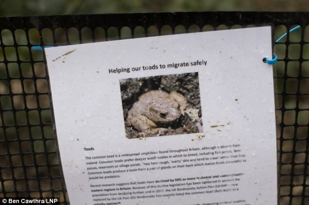 Information: A sign placed on the fence preventing toads from entering the road