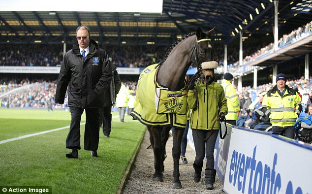 Walkabout: 2004 Grand National winner Amberleigh House was walked around Goodison Park at half-time