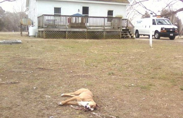 Rights: Woodburn claimed on Facebook that animal control said he was legally allowed to shoot animals that stray on his property