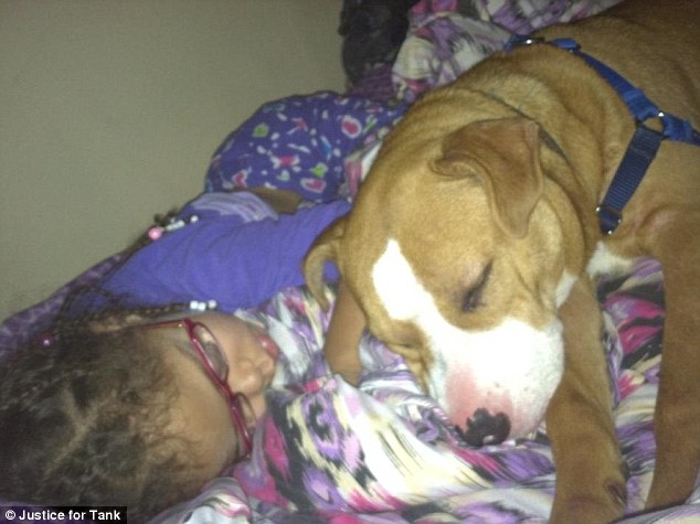 Puppy love: Tank, who was a birthday present for his owner's four-year-old daughter, was described as gentle